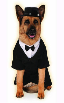' Big Dogs ' Dapper Dog Groom Pet Costume