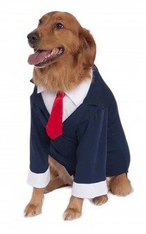 Big Dog Blue Business Suit Costume