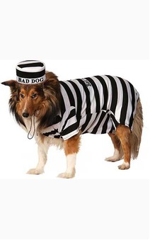Pet Prisoner Dog Convict Costume